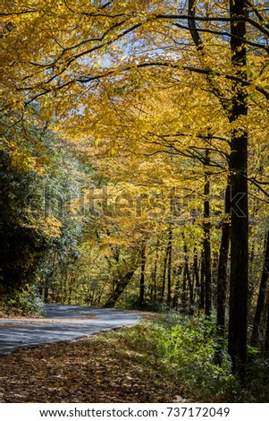 Yellow trees of Autumn in North Carolina mountains
