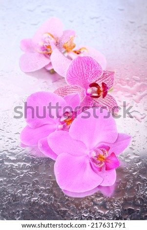 Yellow tropical orchid flowers isolated on white - stock photo