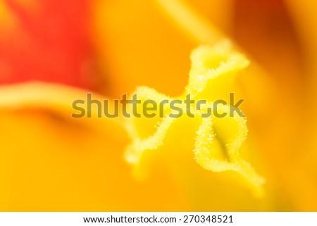 Yellow Tulip Flower Inside Macro - stock photo