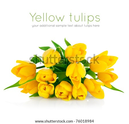 yellow tulip flowers bouquet isolated on white background - stock photo
