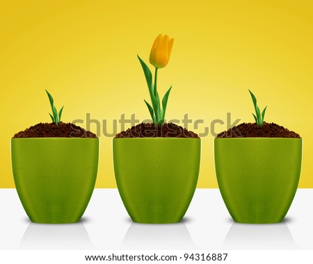 Yellow Tulips growing in green clay gardening pot. - stock photo