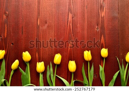 Yellow tulips on brown wooden background.Image of spring season - stock photo