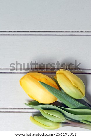 Yellow tulips on painted wood background. - stock photo