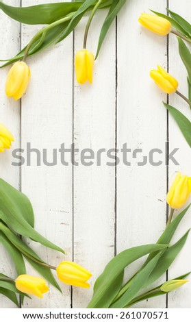 Yellow tulips on white planked wood background from above. Spring - poster layout design with free text space. - stock photo