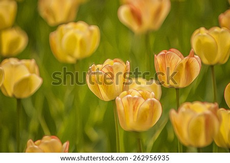 Yellow tulips with selective focus, digital oil painting - stock photo
