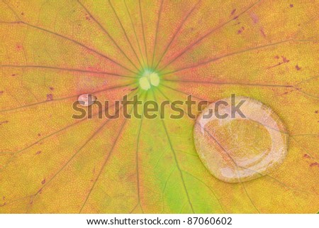 yellow water lilly background with drop water - stock photo