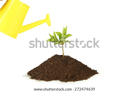 Yellow watering can pouring green plant in soil on white background - stock photo