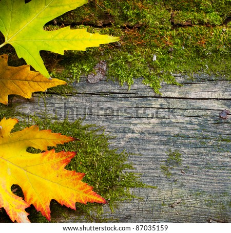 yellow wet autumn leaves on the grunge old wood background - stock photo