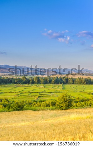 Yellow Wheat and Green Rice Field with Mountains Background under Blue Sky, Chiang Mai, Thailand