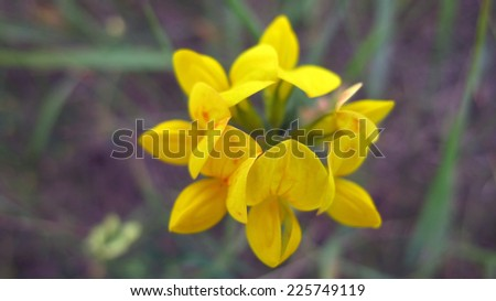 Yellow wild flower, wallpaper, summer day - stock photo