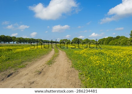 Yellow wild flowers growing on a sunny field in spring
