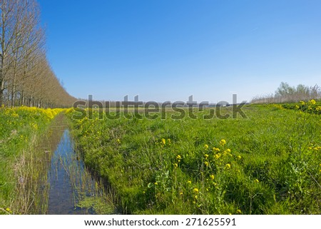 Yellow wildflowers along a ditch in spring - stock photo