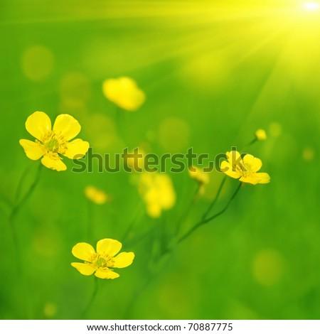 Yellow wildflowers and sun. - stock photo