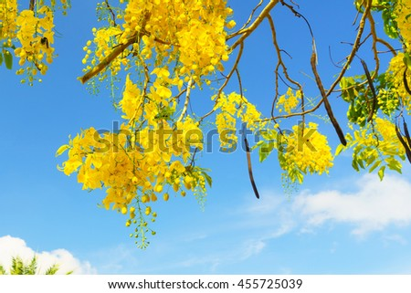 yellower flower on the tree with blue sky background,select focus with shallow depth of field:ideal use for background - stock photo
