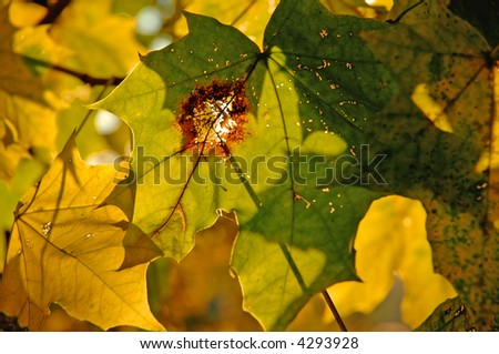 Yellowing leaves - stock photo