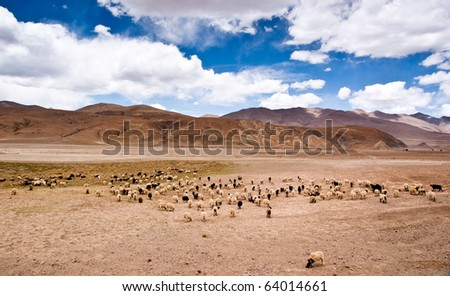 yellowish mountain road view in tibet of China