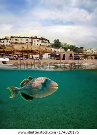 Yellowmargin triggerfish  - stock photo