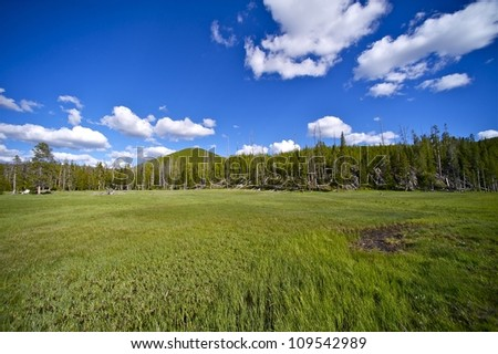 Yellowstone Meadow. Summer Yellowstone Meadow with Forest and Cloudy Blue Sky. Nature Photo Collection. - stock photo