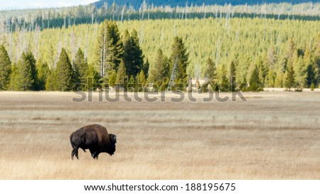 Yellowstone National Park is a national park located primarily in the U.S. state of Wyoming, although it also extends into Montana and Idaho - stock photo