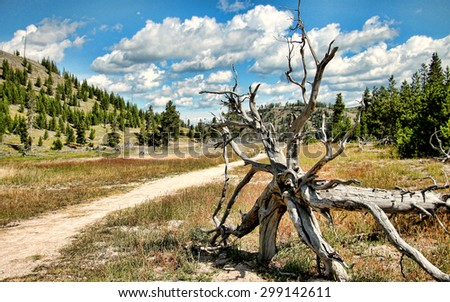 Yellowstone National Park landscape with fallen tree roots in foreground