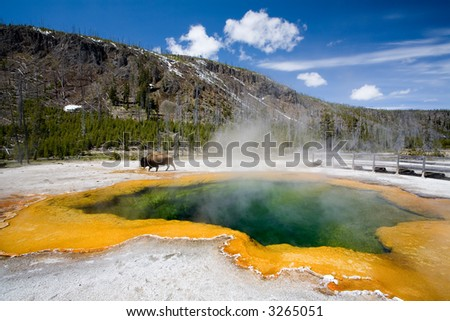 yellowstone national park - the emerald pool with bison roaming in background - stock photo