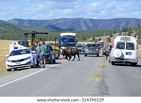 YELLOWSTONE NATIONAL PARK, WYOMING - CIRCA SEPTEMBER 2015. â??Bison Jamsâ? result when visitors stop and gape at Bison crossing the road which cause traffic backups, often involving dozens of vehicles. - stock photo