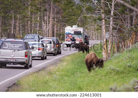 Yellowstone national park, Wyoming - July 12 : traffic jam due to roadside bison; July 12 2014 in Yellowstone national park, Wyoming - stock photo