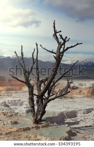 Yellowstone Park - stock photo