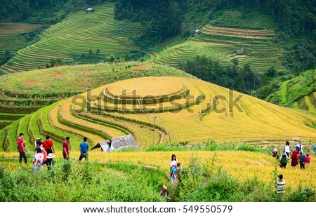 YEN BAI, VIETNAM, September 27, 2016 terraced rice fields. Mu Cang Chai high mountains, Yen Bai province, at harvest time