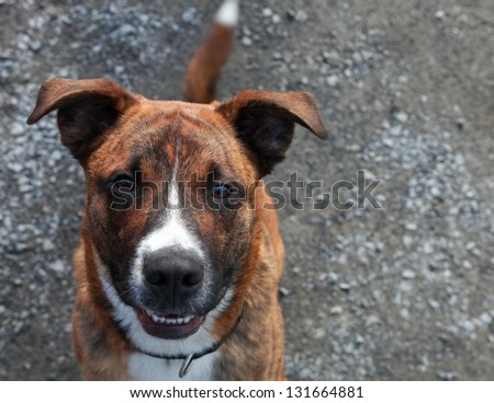 Yes!!! I will have some of those treats. - stock photo