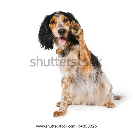 Yo! Dog waving his paw - stock photo