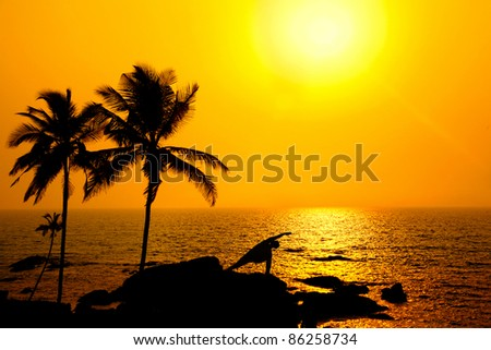 Yoga utthita parsvakonasana triangle pose by Man in silhouette with palm tree nearby outdoors at ocean and sunset background. Vagator beach, Goa, India. Free space for text - stock photo
