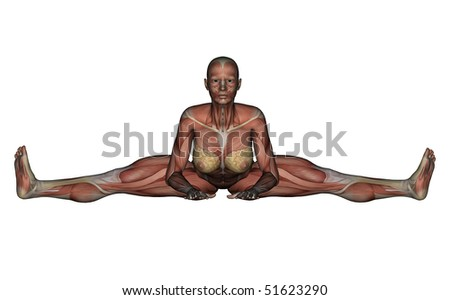 Yoga - Wide Angle Bend Pose. Female Muscles - Front View - stock photo