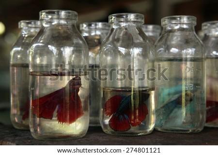 YOGYAKARTA, INDONESIA - JULY 31, 2011: Aquarium fishes on sale at the Pasar Ngasem Market in Yogyakarta, Central Java, Indonesia. - stock photo