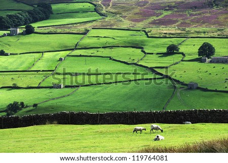 Yorkshire dales hillside with a few sheep. - stock photo