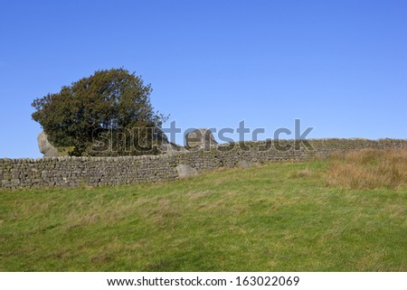 yorkshire dales landscape with a berry laden holly tree and dry stone walls by a grassy meadow - stock photo