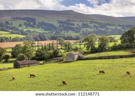 Yorkshire Dales with cows - stock photo