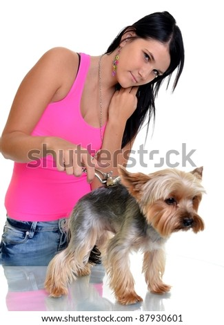 yorkshire terrier  being groomed by dog groomer