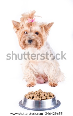 Yorkshire terrier mom and plate with dog food, isolated on white.  - stock photo