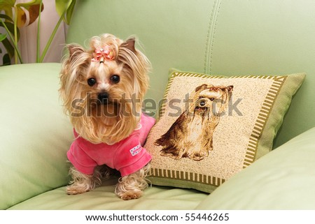 Yorkshire terrier with his portrait