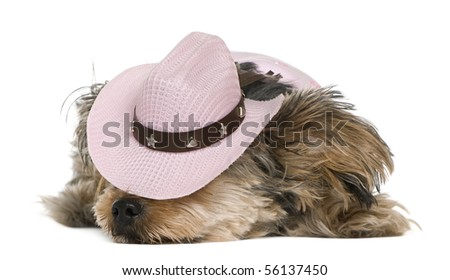 Yorkshire terrier, 2 years old, dressed and wearing a pink cowboy hat lying in front of white background - stock photo