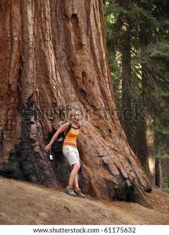 Yosemite National Park - Mariposa Grove Redwoods - stock photo