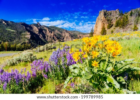 Yosemite National Park, Wyoming, USA - stock photo