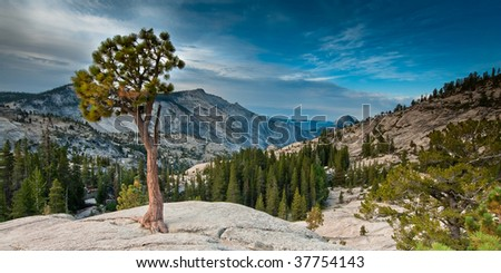 yosemite olmsted point panorama in early morning, yosemite national park, california, usa - stock photo