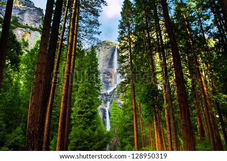 Yosemite Waterfalls behind  Sequoias  in Yosemite National Park,California - stock photo