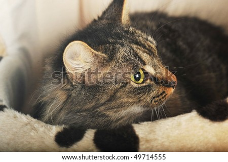Young adorable cute cat in pet house