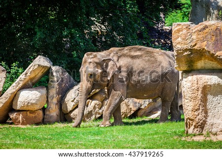 Young African elephant walking on the grass among the rocks. - stock photo