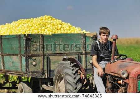 young agriculture worker with  fresh vegetable pepper  food organic cultivated and representing success in small business - stock photo