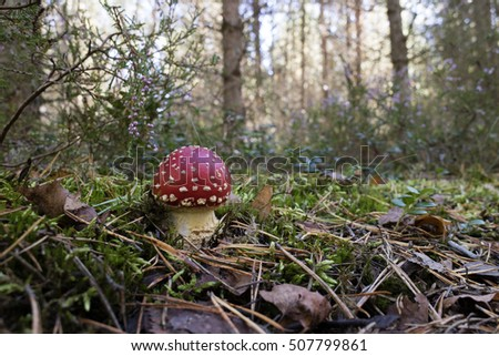 Young Amanita mushroom growing the woods