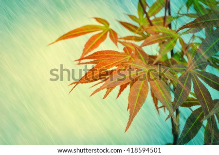Young and beautiful Japanese maple tree with magic yellow moon light and rain shower dreaming and forest atmosphere background - stock photo